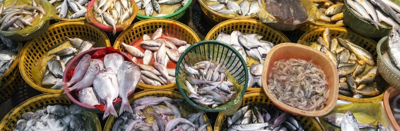چالش های حمل و نقل ماهی و میگو